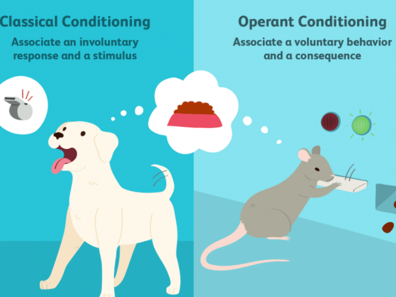 Classical Conditioning vs. Operant Conditioning: Differences and Examples